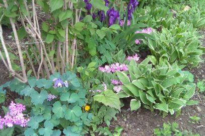 Ласковый май ( утро на ботанической тропе)